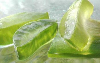 Fresh Green Aloe Vera